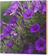 Petunias 2 Wood Print