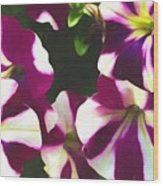 Petunias With A Flare Wood Print