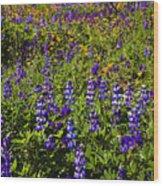 Phacelia Poppies Lupines Wood Print