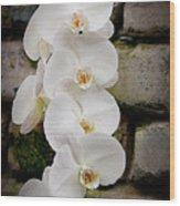Phalaenopsis Brother White Windian Wood Print