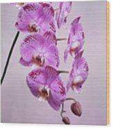 Phalaenopsis Lianher Happy Dancer Wood Print