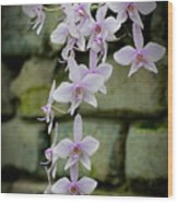 Phalaenopsis Orchid 2 Wood Print