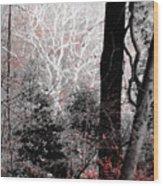 Phantasm In Wildwood Wood Print
