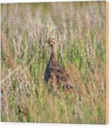 Pheasant Hen Wood Print