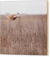 Pheasant In Flight Wood Print