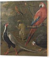 Pheasant Macaw Monkey Parrots And Tortoise  Wood Print