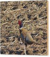 Pheasant On The Move Wood Print