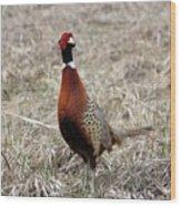 Pheasant Rooster Wood Print