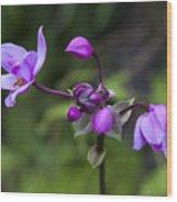 Philippine Ground Orchid Wood Print