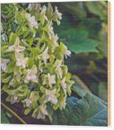 Philipsburg Manor - White Blossom Wood Print