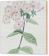 Phlox Acuminata Wood Print