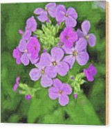 Phlox For You Wood Print
