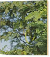 Photo Of Indian Tree Wood Print