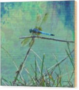 Photo Painted Dragonfly Wood Print