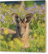 Photogenic Kangaroo Wood Print