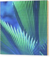 Photograph Of A Royal Palm In Blue Wood Print