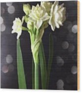 Photograph Of Narcissus Erlicheer A White Flower Wood Print
