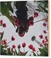 Photographer In Wonderland H084 Wood Print