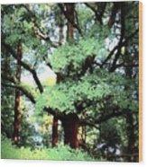Photosynthesis Wood Print