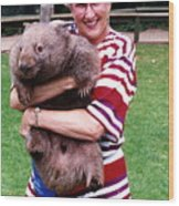 Phyllis Holding Thirty Lb Wombat Australia Wood Print