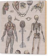 Physiology, Diagrams Of The Human Body Wood Print