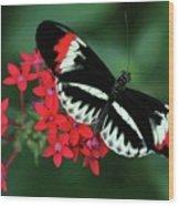 Piano Key Butterfly Wood Print