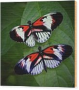 Piano Key Butterfly's Wood Print