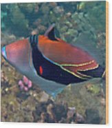 Picasso Triggerfish Up Close Wood Print