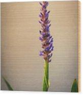 Pickerel Rush Pond Flower Painting Wood Print