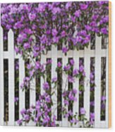 Picket Fence Rhododendron Wood Print