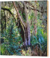 Picnic Time In Florida Wood Print