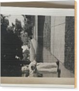 Picture Of Boy With Camera Wood Print