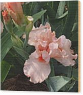 Picture Peach Wood Print