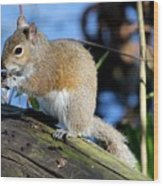 Picture Perfect Squirrel Wood Print