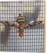 Picture Winged Bee Fly On Screen     Spring      Indiana Wood Print