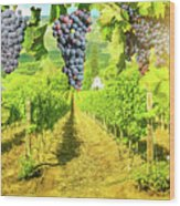 Picturesque Vineyard At Sunset Wood Print