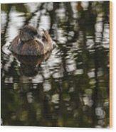 Pied-billed Grebe Wood Print