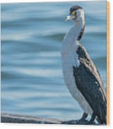 Pied Cormorant On Old Wharf Wood Print