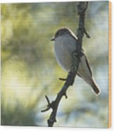 Pied Flycatcher 1 Wood Print