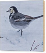 Pied Wagtail In The Snow Wood Print