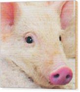 Pig Art - Pretty In Pink Wood Print
