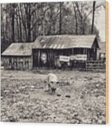 Pig Farm Lot B Wood Print