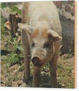 Pig On A Farm Wood Print