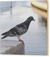 Pigeon By The River Wood Print