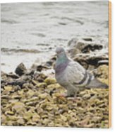 Pigeon Close To The River Wood Print