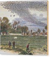 Pigeon Hunting, C1875 Wood Print