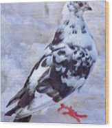 Pigeon On Ice  1 Wood Print