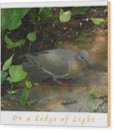 Pigeon Poster Wood Print