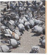 Pigeons Are Eating Forage  Wood Print