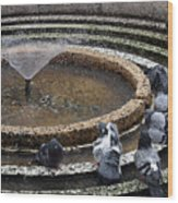 Pigeons Are In The Fountain Refreshes Wood Print